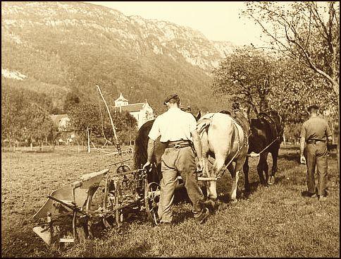 Labour dans le Champsaur